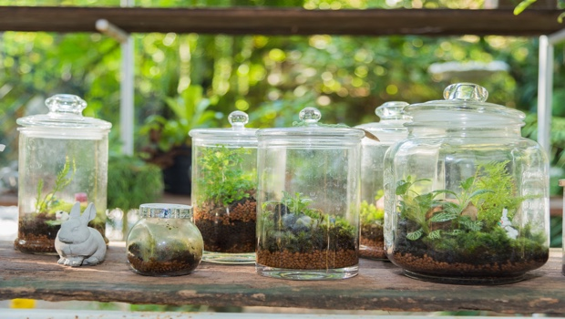 The Art Of Planting Container Gardens Terrariums A Gardening